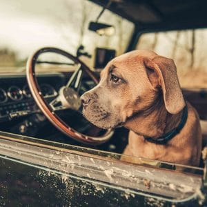 Land Rover Defender with Puppy