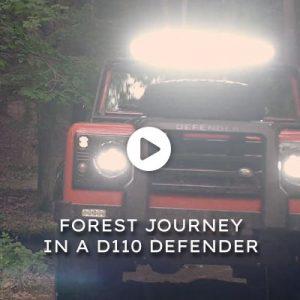 Emma: Forest Journey